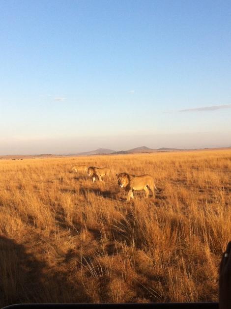 On Safari at Springbok Lodge in Nambiti (Seth J. Frantzman)
