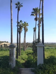 The old pathway and palm trees at Bir Salem (Seth J. Frantzman)
